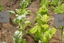 Huerta en Casa: Lográ Mejores Sabores en la Mesa